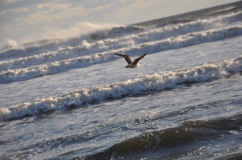 Anticipate Waves in Your Flight Pattern. Gypsy Tornado 2012.